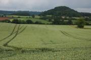 Farmland at Canon Pyon