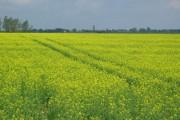 Fields at Beach Farm, near Kessingland