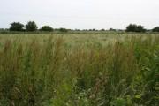 Farmland on Burgh Marsh, near Skegness