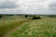 Clover field near Chaddesley Wood