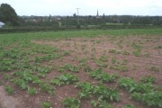 Crop field at New House Farm