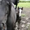 Tiny Foal