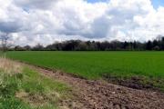 Farmland opposite Boot Farm