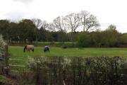Field next to Inhurst Lane