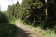 Winkleigh Wood