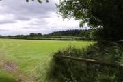 Looking towards East Wood