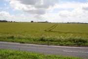 View across cornfield