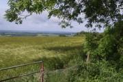 Barley on Bude Hill