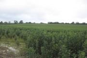 Crop near Beans Land Farm