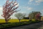 Rape Fields at Notton Grange