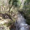 Pentre Coed Dingle - view downstream