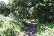 Woodland near Kimberworth Park