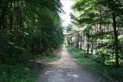 Wadworth Wood