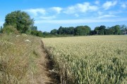 Ripening wheat, Low Field
