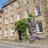 Wysteria in Wirksworth