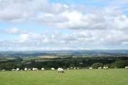 Yarnscombe: a flock grazing