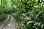 Yarnscombe: near Oakenhill Bridge