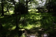 In Birches Copse