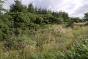 Northcombe Plantation