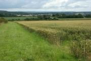 Cornfield near Camerton Farm