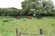 Horses on Haxey Carr