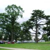 Trees in the grounds of Ordnance Survey HQ