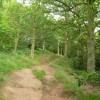 Woodland in Habberley Valley Nature Reserve