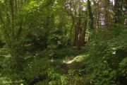 Woods behind the school