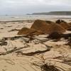 Seaweed at Sennen Cove