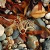 Pebbles on a Cornish beach
