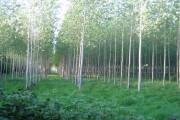 Decoypond Wood near Calvert 2