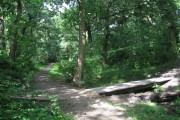 Nature Trail, Clinkham Wood