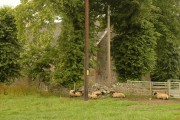 Field, sheep, and side of church near Kiltarlity
