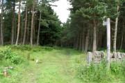 Path into wood