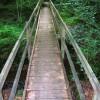 Footbridge, Dallington Forest