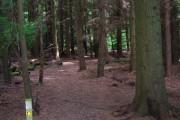 Footpath, Forge Wood