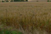 Farmland off Mere Road