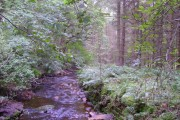 Stream and Woods in Woods near Dallow