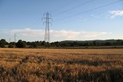 Barley near Gobowen