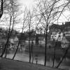 River Nidd in March:  Knaresborough, Yorkshire
