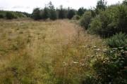 Edge of woodland near Hardisworthy