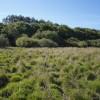 Whiteleigh Meadow
