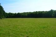 Hoadley Wood
