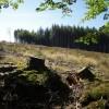 Clear fell, Morcombe Plantation