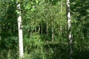 Woodland near Stanton under Bardon