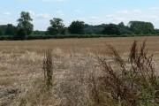 Farmland south of Swithland