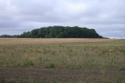 Lords Wood, south of Kelsall