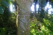 Penwine Cross