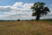 Stubble field with single oak near Gillow Farm