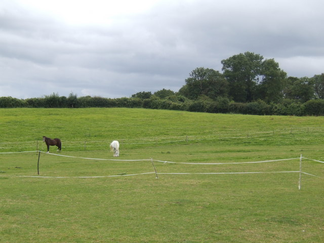 Paddocks on the north side of Pedwell Hill